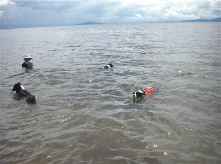 泳ぐワンコ達