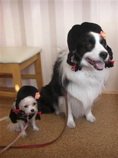 姫ちゃん&アッシュ