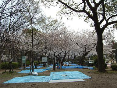 靱公園の桜