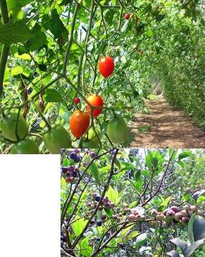 収穫体験(9月)