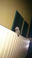 フクロウ4