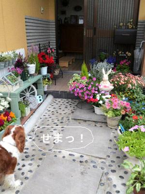 うさぎと花とバディ