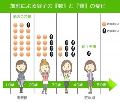 年代別卵子の数と質