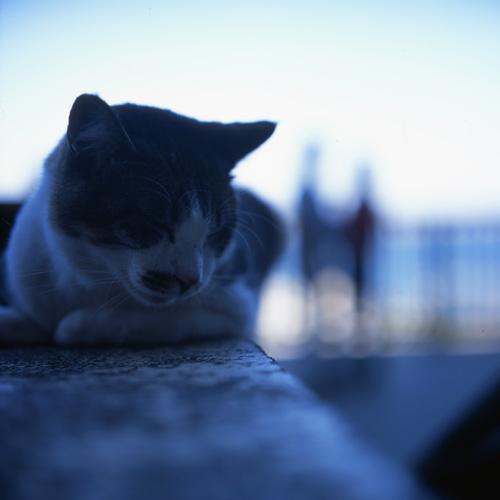 江ノ島の海と恋と猫