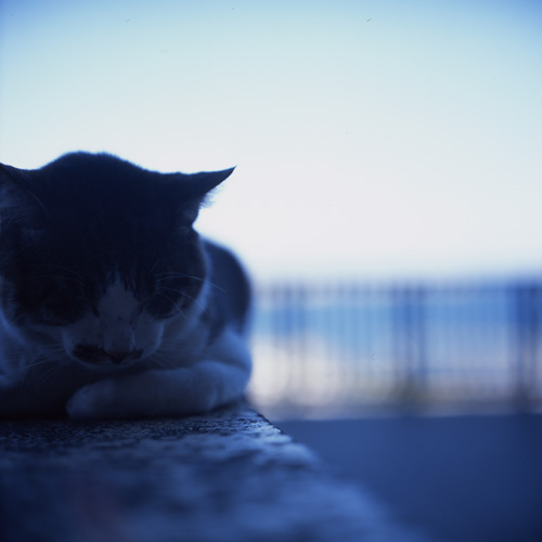 江ノ島の海と猫