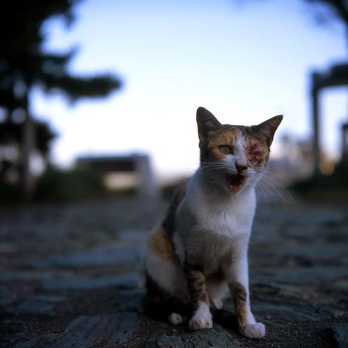 江ノ島の子猫