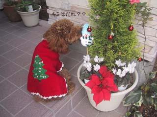 クリスマス犬でしゅ