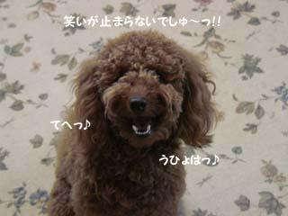 笑いがぁ〜!
