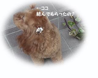 ちょんまげ〜