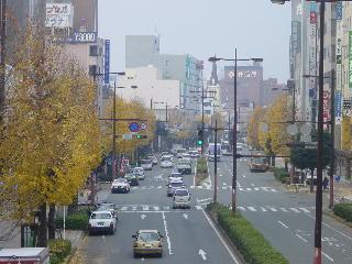 久留米市のメインストリート明治通りのイチョウ並木