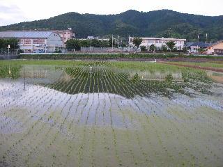 高良山と田植え