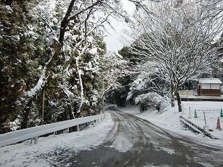高良山、雪の車道