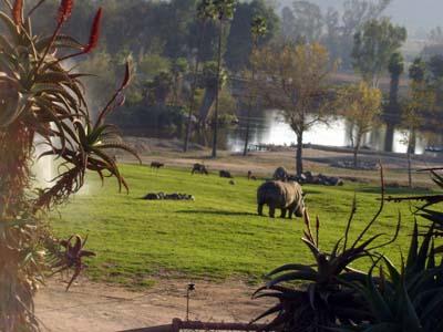 rhinoscene