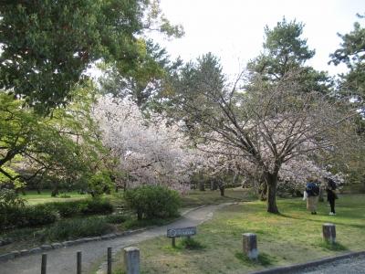桜の御苑.JPG3.JPG