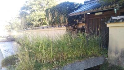 上賀茂神社の社家3.jpg