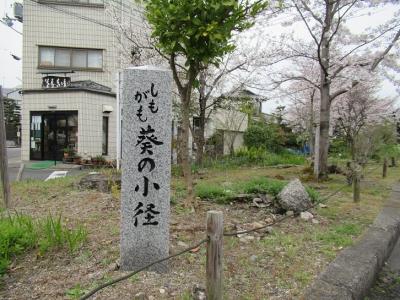 葵の小径.JPG