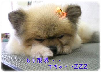 寝ちゃった〜