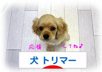 ランキング参加中〜♪