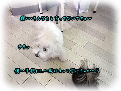 2010-09-17-018h.jpg