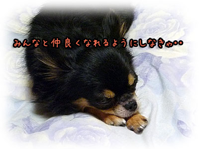 2010-09-22-002r.jpg