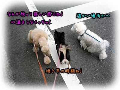 2010-09-25-001f.jpg