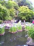 長谷寺の庭