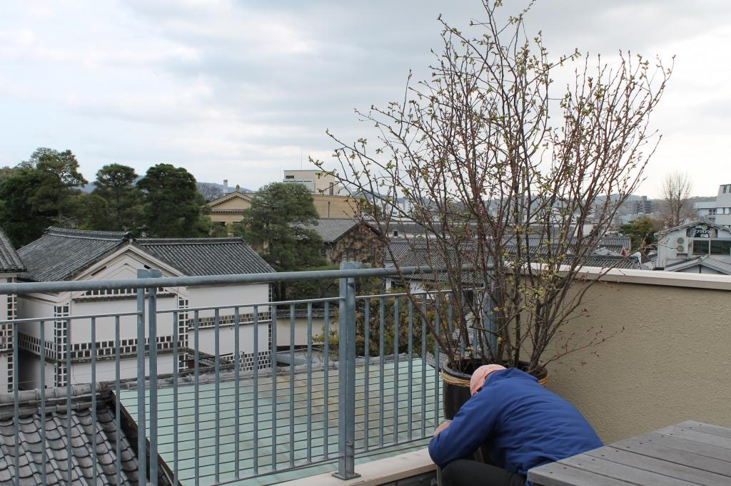 6周年 屋上に桜が届いています