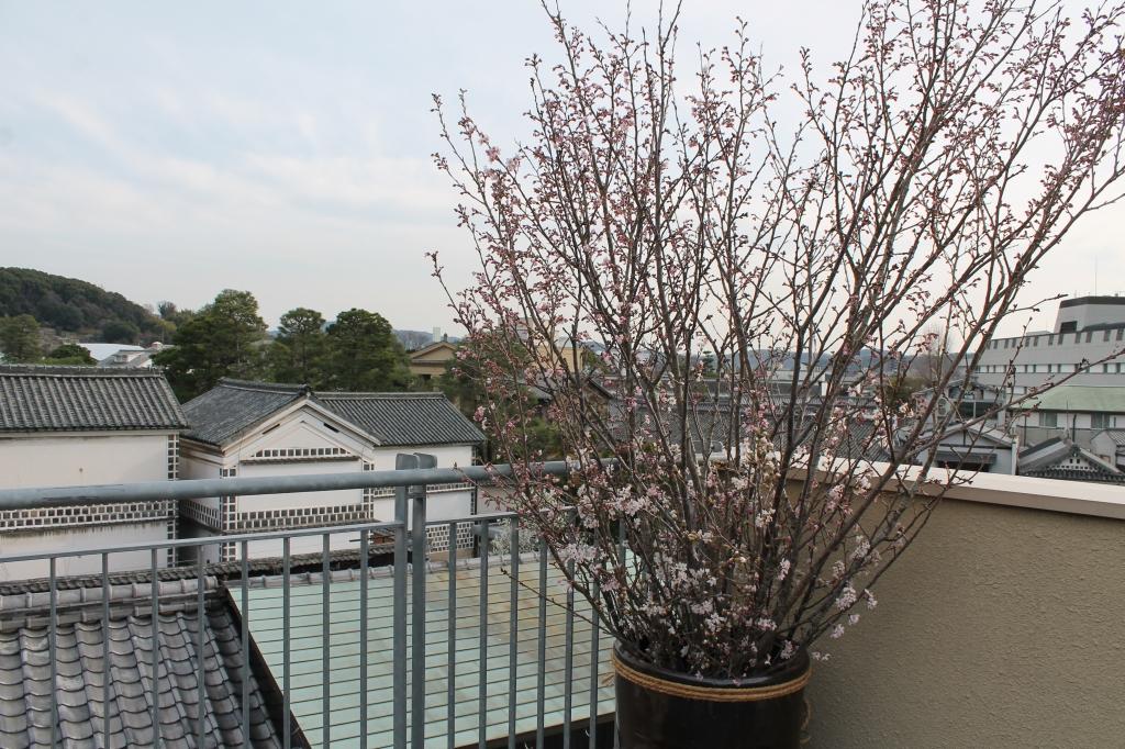 7周年 屋上に桜が届いています