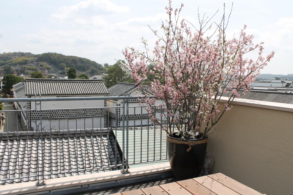 9周年の桜