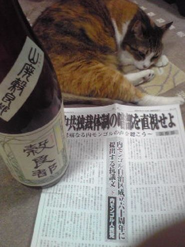 今夜の愛猫と うまい酒