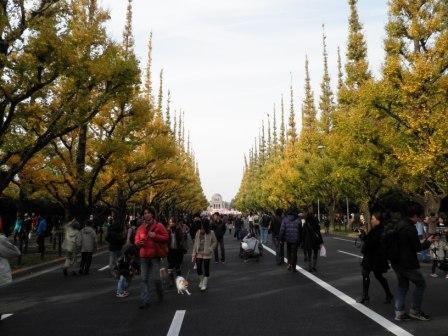 神宮の銀杏並木