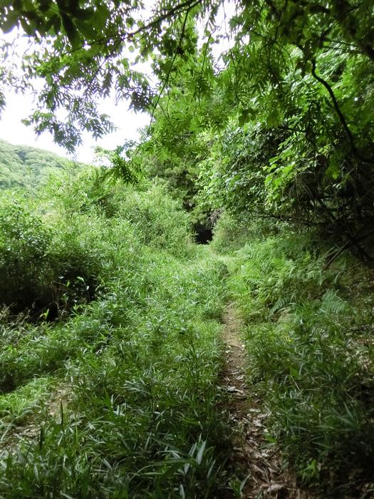 山道 田舎の山道 草のトンネル 夏の山奥