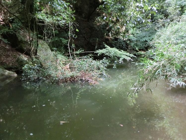 夏の川 山の堰 8月の田舎のため池