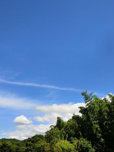 夏快晴 里山の空 木と空