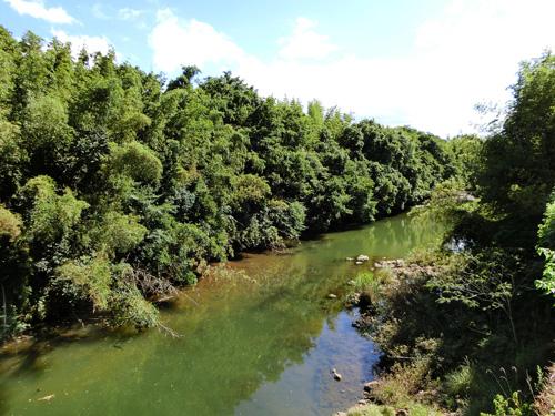 田舎の川 水面に森の影 鏡面の川 夏快晴
