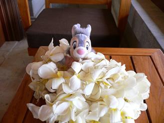ひぇ〜。お花の中に埋もれたよ