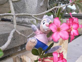 花に埋もれた・・・