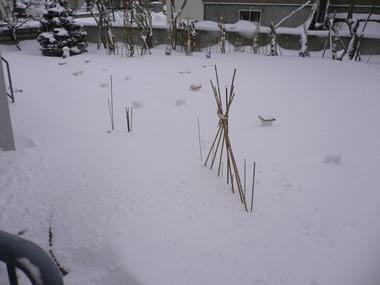 大雪のお庭
