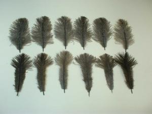 羽毛の構成