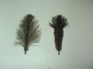 羽毛の形状