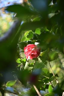 神社 公園 花.JPG