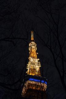 東京タワー_tokyo tower_夜_枝_ライトアップ_light up.JPG