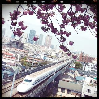 新幹線 八重桜 日吉