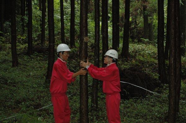 木を揺らして 先端を探してね