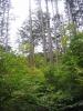 立ち枯れが出来て下層木が繁茂した林