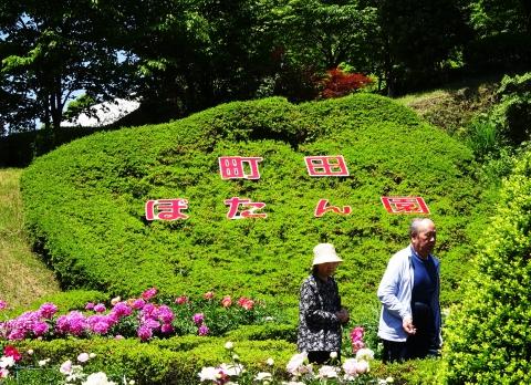町田ボタン園.JPG