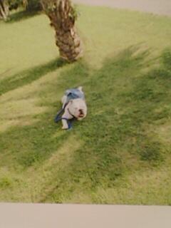 草原ジェームズ画像
