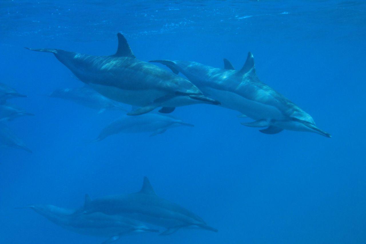 sea-critters6.jpg