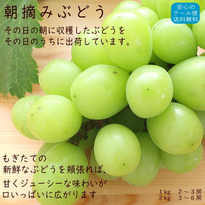 おひさまとくだもの 薩摩川内市東郷町 ぶどう 巨峰 シャインマスカット 新品種