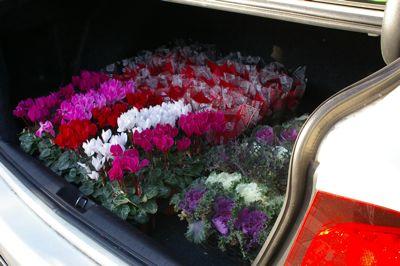 トランクの花